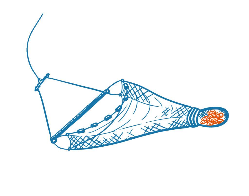 scallop harvester illustration