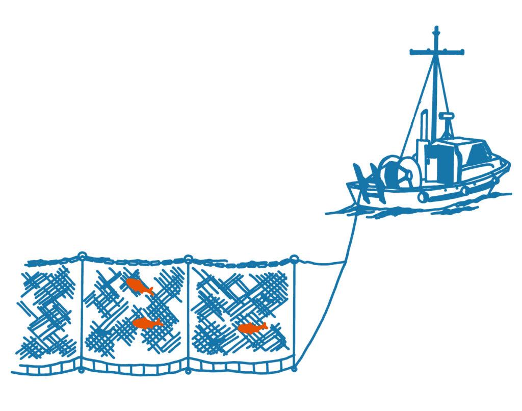 Gillnetting illustration