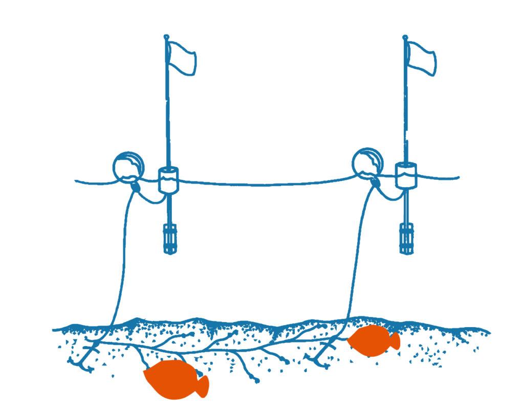 longlining illustration