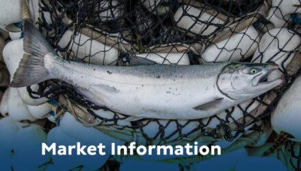 salmon in net