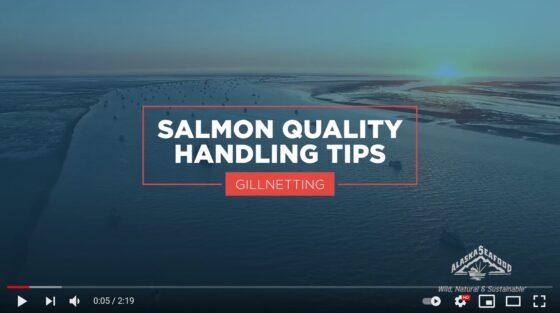 Salmon Quality Handling Tips for Gillnetting