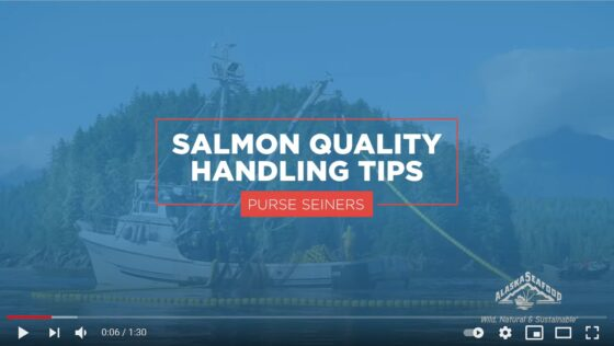 Salmon Quality Handling Tips for Purse Seining