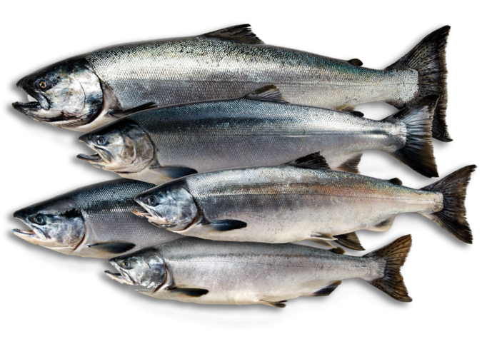 https://www.alaskaseafood.org/wp-content/uploads/all-salmon-species.png