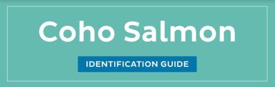 Coho Salmon ID guide