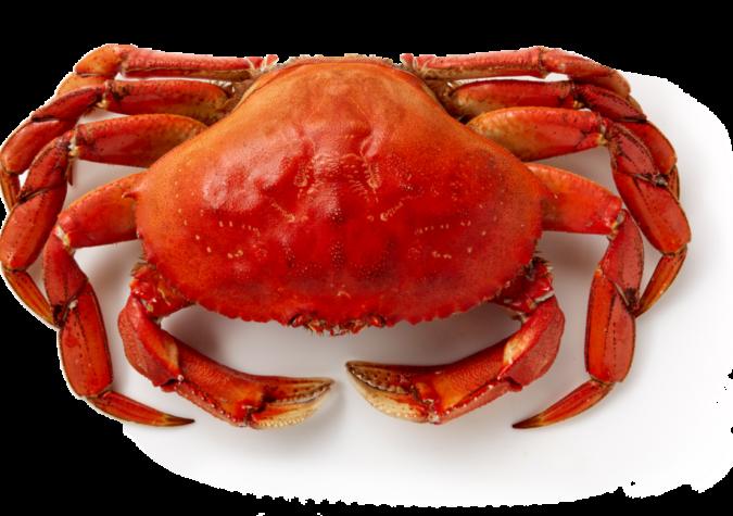 https://www.alaskaseafood.org/wp-content/uploads/crab-2.png