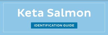 Keta Salmon ID guide