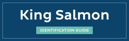 King Salmon ID guide