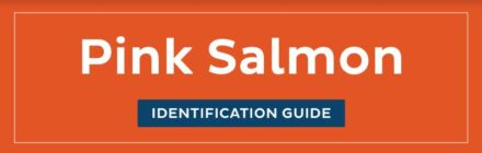 Pink Salmon ID guide