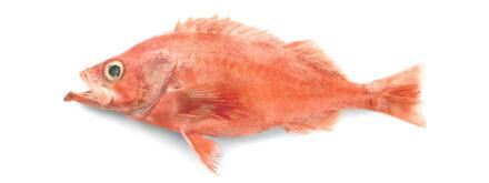 Rockfish 2