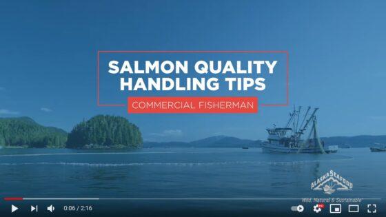 Salmon Quality Handling Tips for Commercial Fishermen