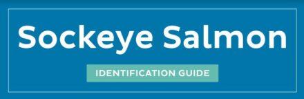 Sockeye Salmon ID guide