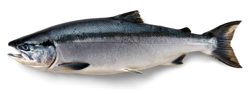 Fishermen Resources 5